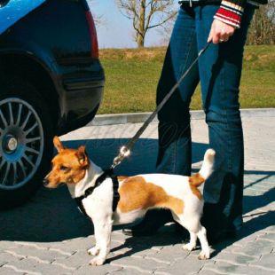 Biztonsági kutyapóráz autóba, 40 - 60 cm