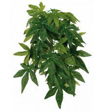 Terráriumi növény Abutilon - akasztható 20 x 50 cm