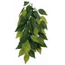 Terráriumi növény FIKUS - akasztható 20 x 30 cm