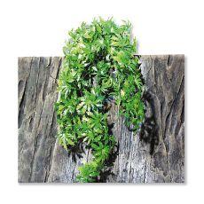 TerraPlanta Cannabis terráriumi növény - 65cm