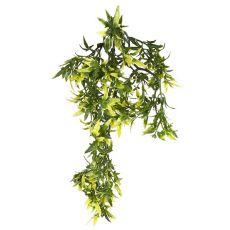 Croton terráriumi dísznövény, 30 cm