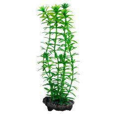 Egeria densa (Anacharis) - műnövény Tetra 23 cm, M