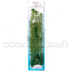 Cabomba caroliniana ( Green Cabomba) - műnövény Tetra 46 cm, XXL