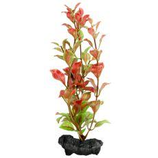 Ludwigia repens ( Red Ludwigia) - növény Tetra 15 cm, S