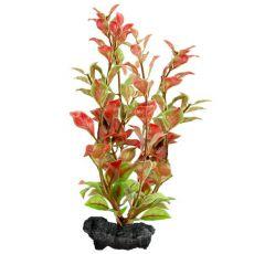 Ludwigia repens ( Red Ludwigia) - növény Tetra 23 cm, M