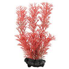 Myriophyllum heterophyllum (Red Foxtail) - növény Tetra 15 cm, S