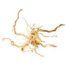 Akváriumi fagyökér - Cuckoo Root - 46 x 46 x 17 cm