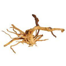 Akváriumi fagyökér - Cuckoo Root - 43 x 34 x 24 cm
