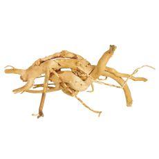 Akváriumi fagyökér - Cuckoo Root - 21 x 15 x 10 cm
