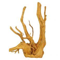 Akváriumi fagyökér - Cuckoo Root - 32 x 17 x 48 cm