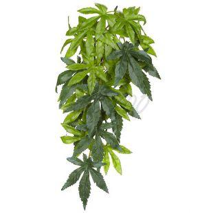 Abutilon Silk Small - terráriumokba való növény