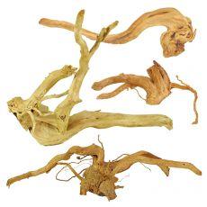 """Akváriumi fagyökér - Cuckoo Root """"STANDARD"""", 30 - 60 cm"""