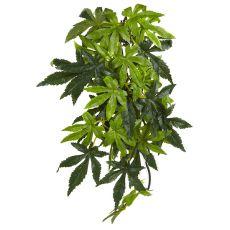 Abutilon Silk Medium - terráriumi növény