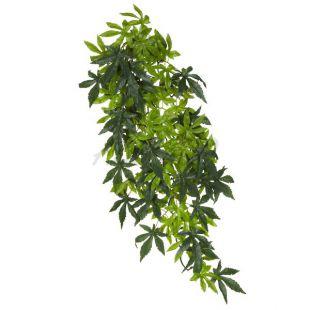 Abutilon Silk Large - növény terráriumba