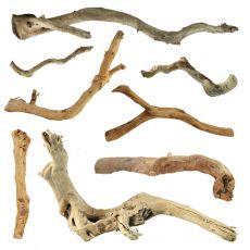 """Akváriumi fagyökér - Cuckoo Root """"BASIC"""" 15 - 30 cm"""