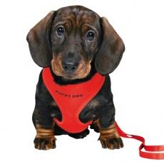 Hám és póráz kölyök kutyának - piros