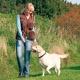 Kiképző mellény Dog activity - barna,L