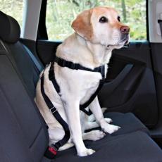 Biztonsági kutyahám, autókba - M, 50 - 70 cm
