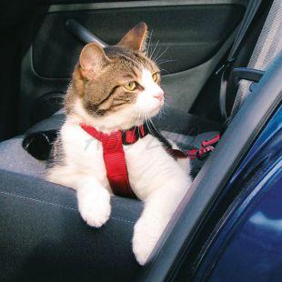 Biztonsági hám autóba macskáknak - 20 - 50 cm
