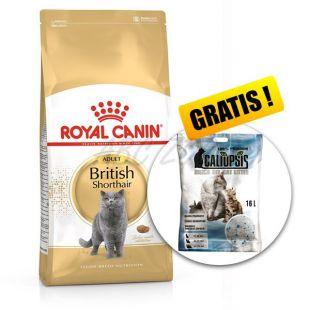 Royal Canin BRITISH SHORTHAIR 10 kg + AJÁNDÉK