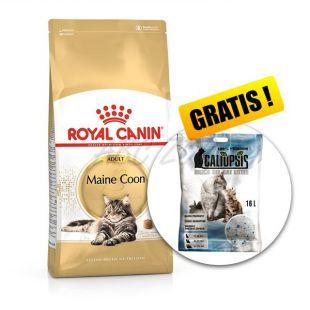 ROYAL CANIN Maine Coon Adult táp Maine Coon macskák számára 10 kg + AJÁNDÉK