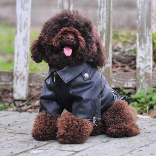 Műbőr kabát kutyáknak - fekete színű, sas mintás, XS