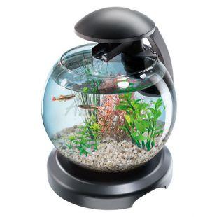 Akvárium kárász és harcoshal számára - gömb 6,8 L