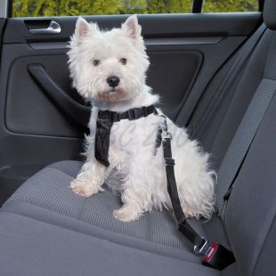 Kutyahám autóba, biztonsági - XS, 20 - 50 cm