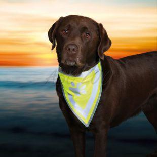 Fényviszaverő kutyasál - méret S-M
