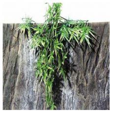 Terráriumi növény TerraPlanta Madagaskar Bambus - 50 cm