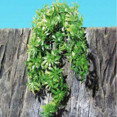 Terráriumi növény TerraPlanta Canabis - 50 cm