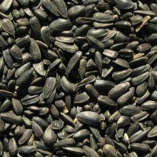 Napraforgómag fekete - 1kg