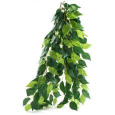 Ficus silk medium -akváriumi növény, 55cm