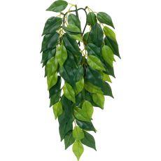 Ficus silk small - növény terráriumba, 45cm