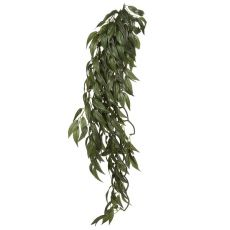 Ruscus Silk Large - növény terráriumba, 70cm